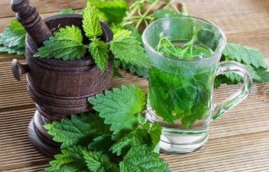Health Benefits of Nettle