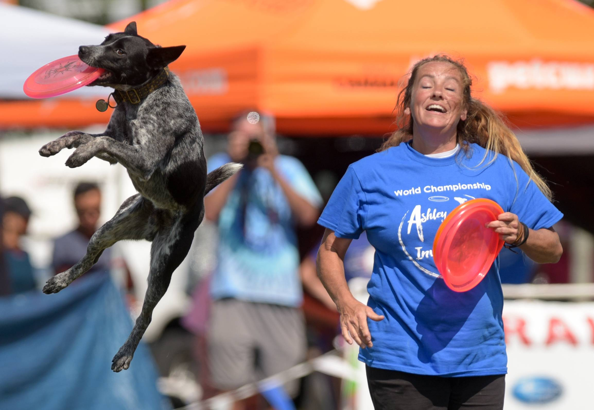 Tracy Custer of Missouri and her dog, Wing nut, compete Sunday during the 2017 Ashley Whippet K-9 Frisbee World Championships in Naperville.