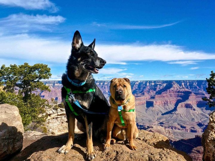 Pet animal friendly travel destinations for travelers