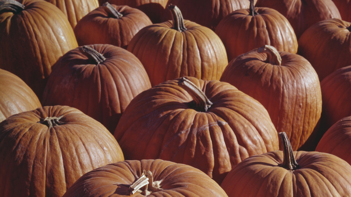 6 Things You May Not Know About Pumpkins