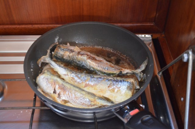 Scandinavian Garfish