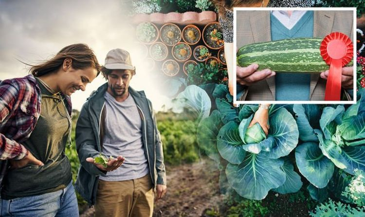 How to grow giant vegetables – why NOW is the time to sow seeds for supersized crops