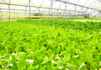 How To Start Vegetable Farming In Nigeria