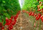 How to Start Pepper Farming in Nigeria