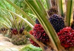 How To Start Oil Palm Farming In Nigeria: Complete Guide