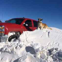 You can't go anywhere when your truck becomes part of the snow bank.
