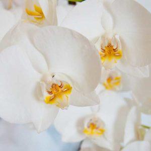 RHS Orchid Show & Plant Fair
