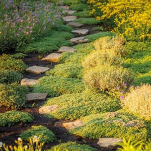 Garden tricks with paths