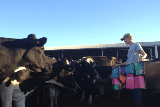 8 Great Questions about Cows   Dairy Moos