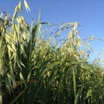 Spring Harvest 2012