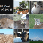 The 10 Most Popular Blog Postings of 2011!