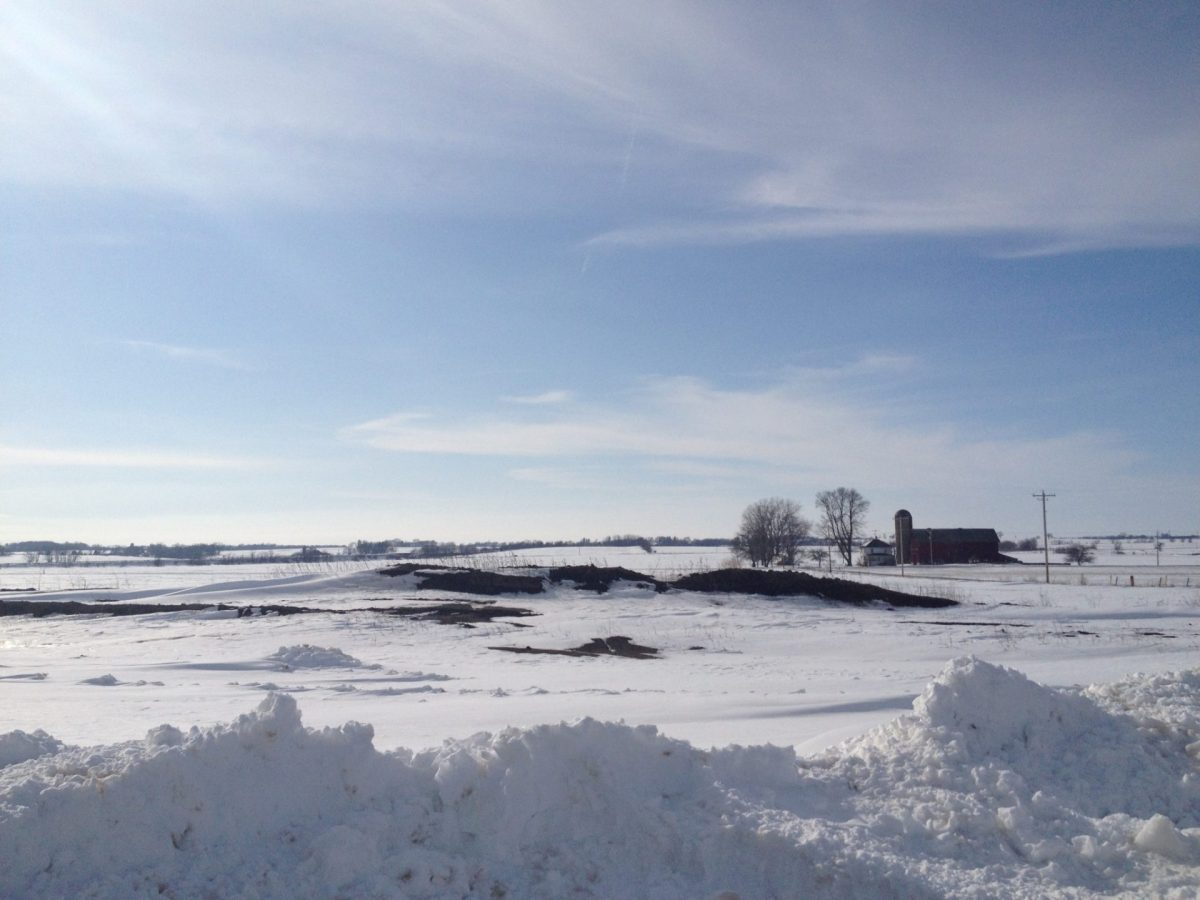 Do Cows like Cold Weather? | Dairy Moos