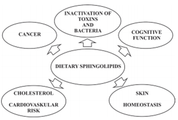 Health Benefits of Spingolipids in dairy