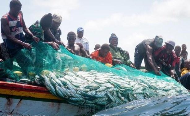 Ngor: La raréfaction des poissons dans les eaux sénégalaises inquiètent les pêcheurs