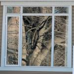 window reflection, trees