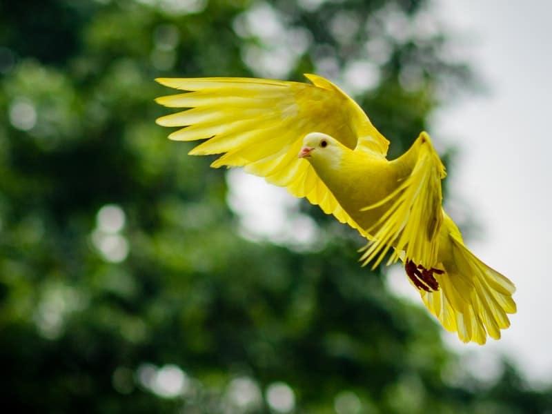 Berburu Burung di Bulan-bulan Haram apakah Terlarang dalam Syariat Islam-dakwah-id