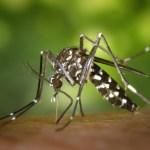 Hukum Membunuh Nyamuk dengan Raket Listrik-dakwah.id