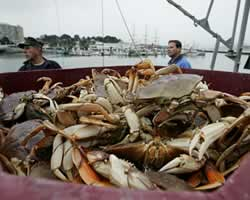 Nelayan Kepiting (Getty Images)