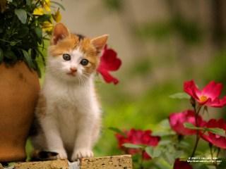 Kucing (gambarkucingimut.blogspot.com)