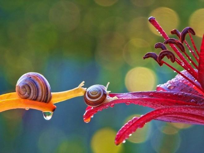 snail-16
