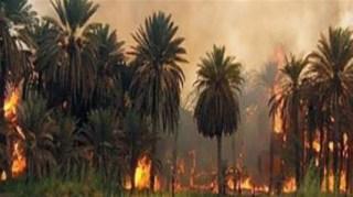 Pembakaran kebun warga Sunni (herakiq.com)