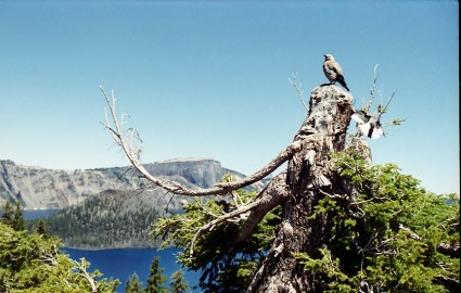 Sentinel over Crater Lake