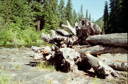 Artful deadfall on the Rogue River bank