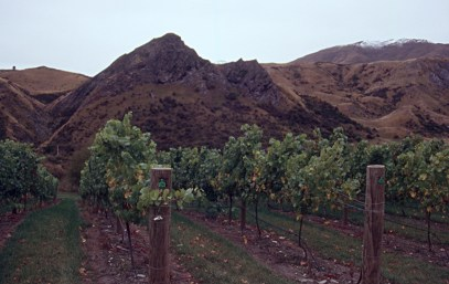 Not much room for vines up here