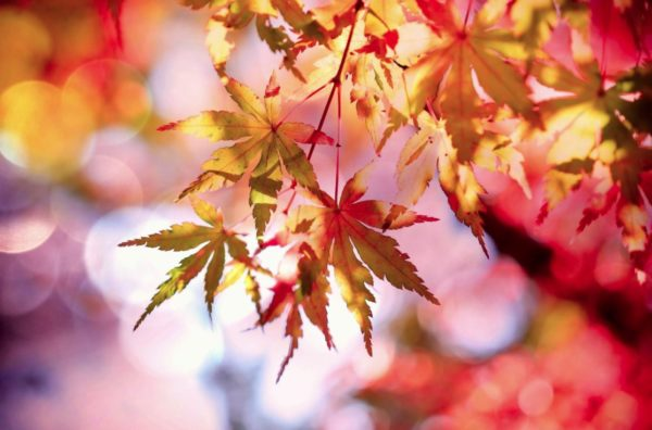 Six ways to be all about autumn in Dallas