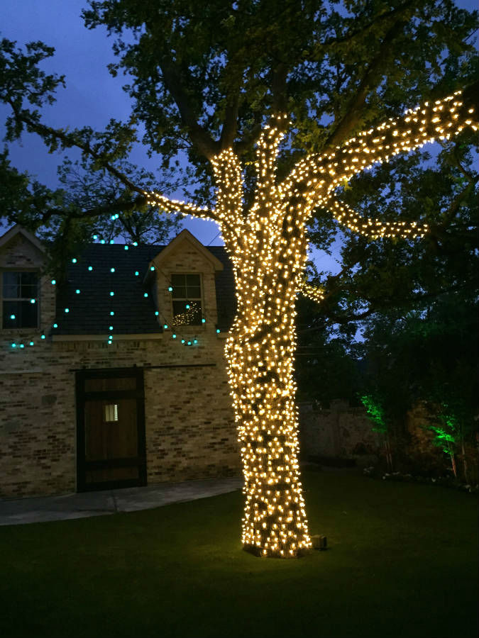 How To Put Christmas Lights On Tree Trunk ...