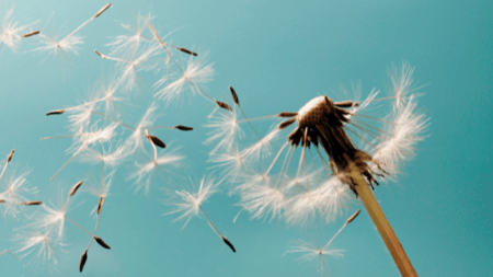 Dandelions and Documentation