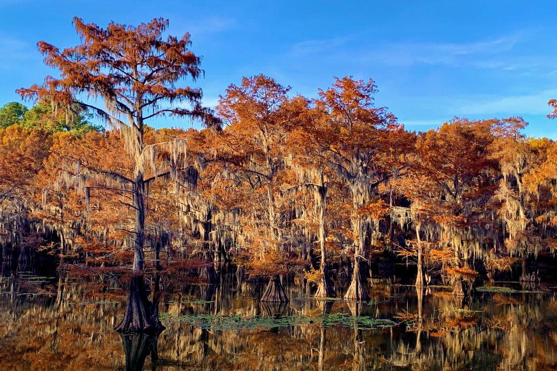 Caddo Lake - Texas Fall Travel