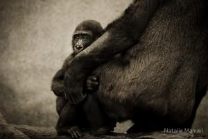 """""""Protection"""" v. Natalie Manuel (CCBYNCND) by Flickr"""