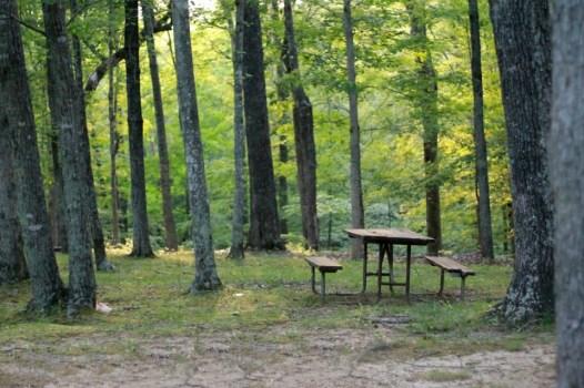 Picnic nel bosco