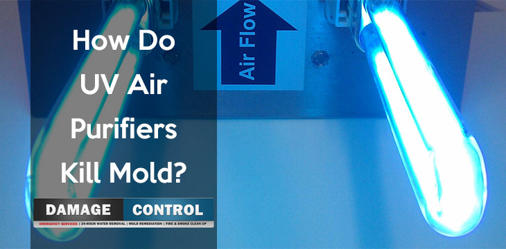 Why Air Purifiers Kill Mold Damage Control