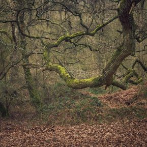 oak tree Shotover Country park Landscape Photography