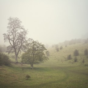 purchase tring park giclée print Landscape Photography