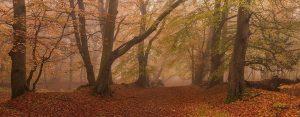 Autumn Ashridge Chiltern Woodland Landscape Photography