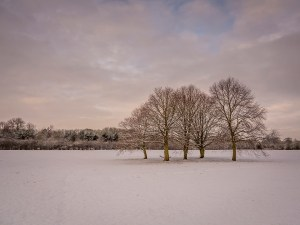Snow Trees Landscape Photography