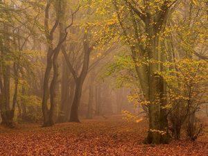 Chiltern Woodland Autumn Landscape Photography
