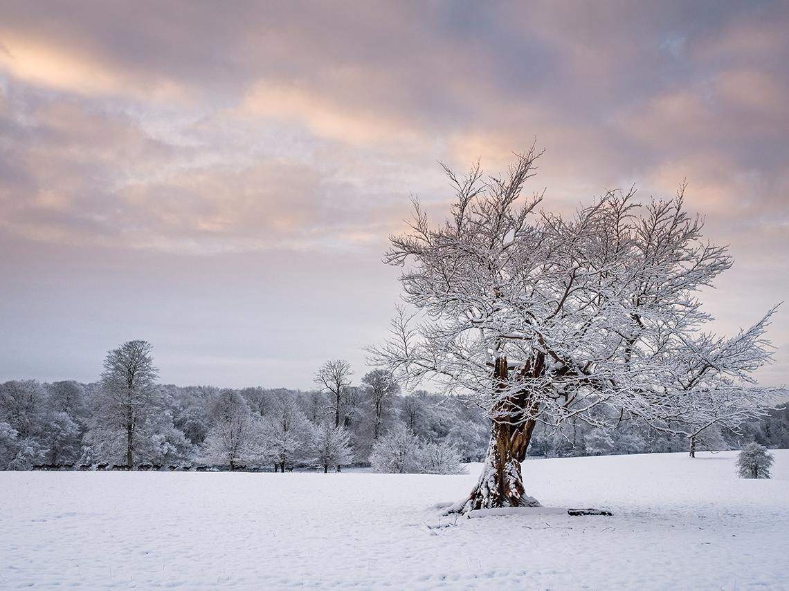 Ashridge Chiltern Woodland Snow Landscape Photography