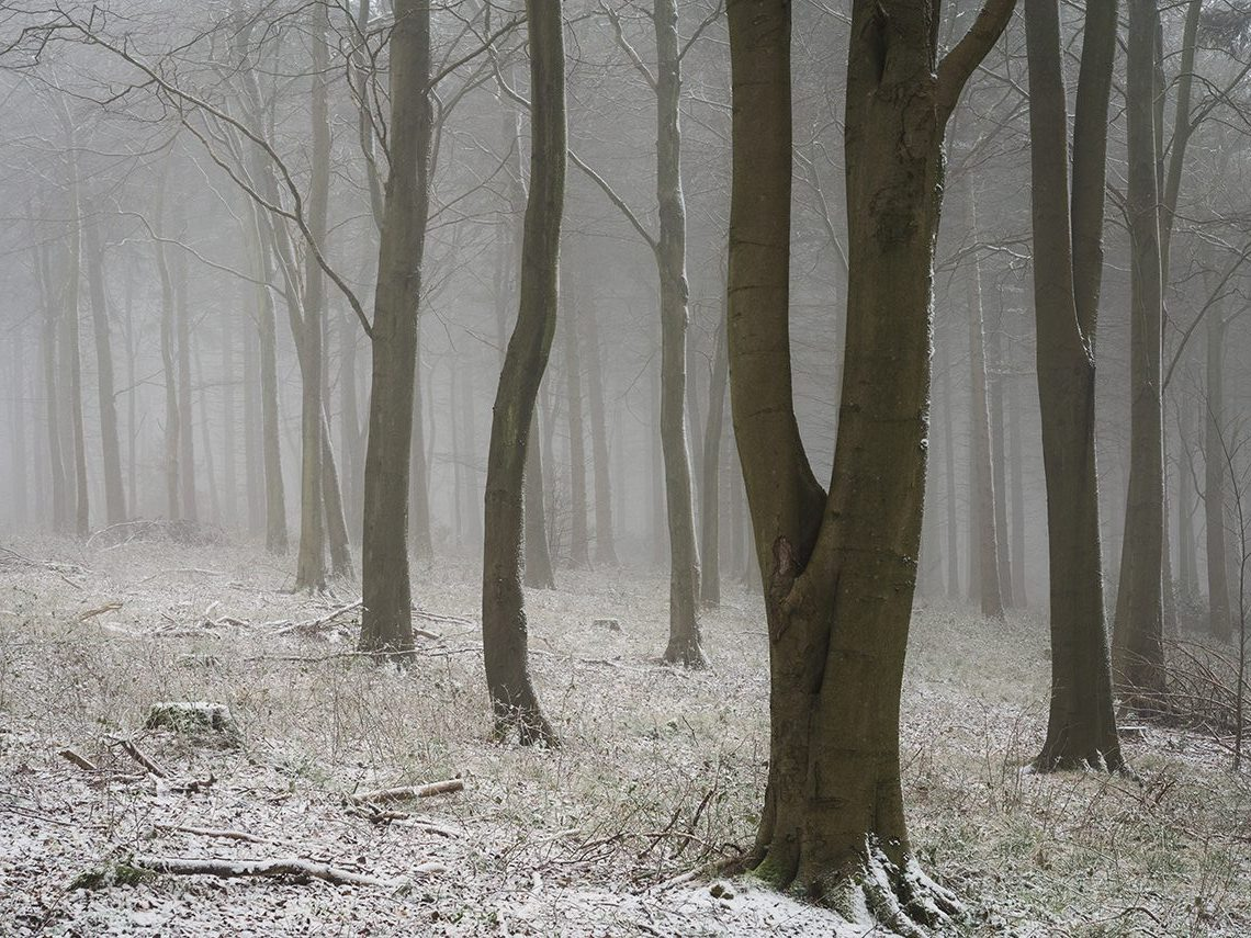Wendover Woods Chiltern Woodland snow Landscape Photography