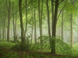 Wendover Woods Chiltern Woodland Landscape Photography