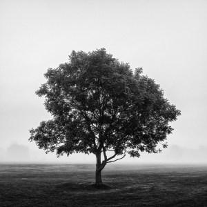 misty tree Landscape Photography