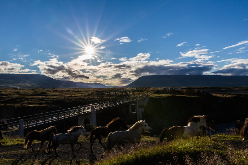 Guide Islande Lieux Incontournables DamienLB godafoss chevaux