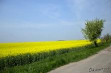 Cesta u pole