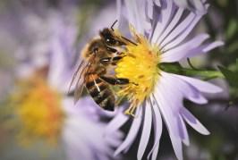 Včely a med