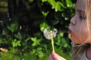 child dandelion