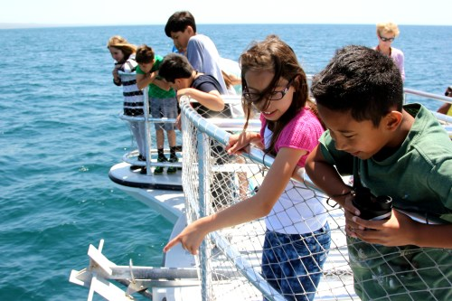 Fourth- and fifth-grade students from Wood Canyon Elementary observe wildlife off the coast of Dana Point. The students are part of a Capistrano Unified School District program that aims to prepare them for the future using a new, gray whale-focused curriculum. Photo: Brian Park