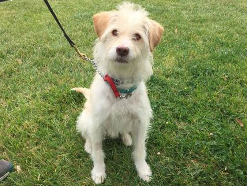 McCoy is 2 years old and available at the the San Clemente/Dana Point Animal Shelter. Photo: Courtesy the San Clemente/Dana Point Animal Shelter